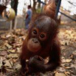 HSBC finanzia la distruzione delle foreste indonesiane